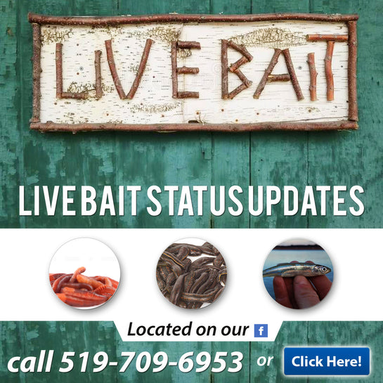 Buy Fishing Live Bait & Fishing Tackle Now