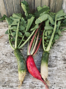 Daikon Radishes (Mixed)