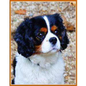 Diamond Painting Cavalier King Charles Spaniel