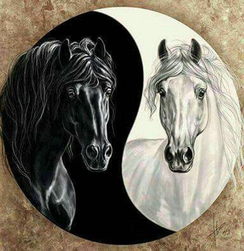 diamond painting black horse white horse Tai Chi