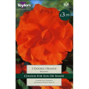 3 Begonia Orange Double 6-7
