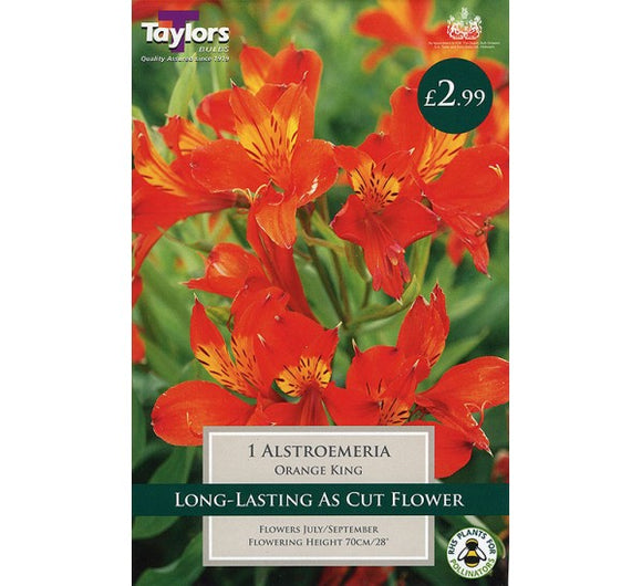 1 Alstroemeria Orange King I