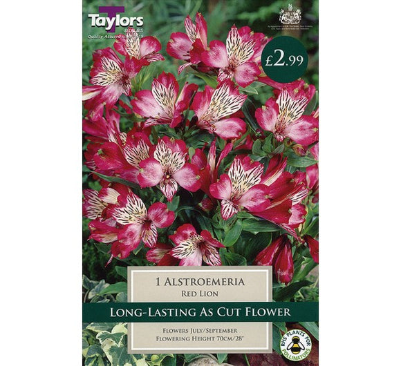 1 Alstroemeria Red Lion I