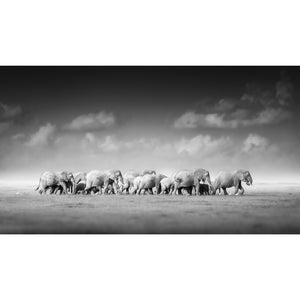 Elephant herd printed canvas