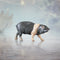 hand painted bone china saddleback pig gift figurine