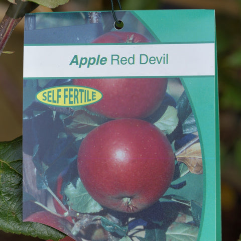 Apple (Malus) 'Red Devil'