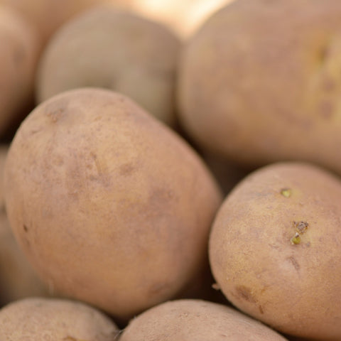 Charlotte summer seed potatoes