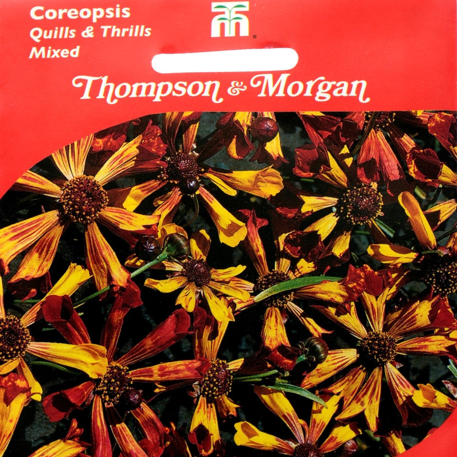 Coreopsis Quills & Thrills Mixed