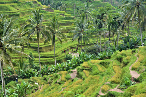 Terraced Rice Paddies, Bali, Indonesia