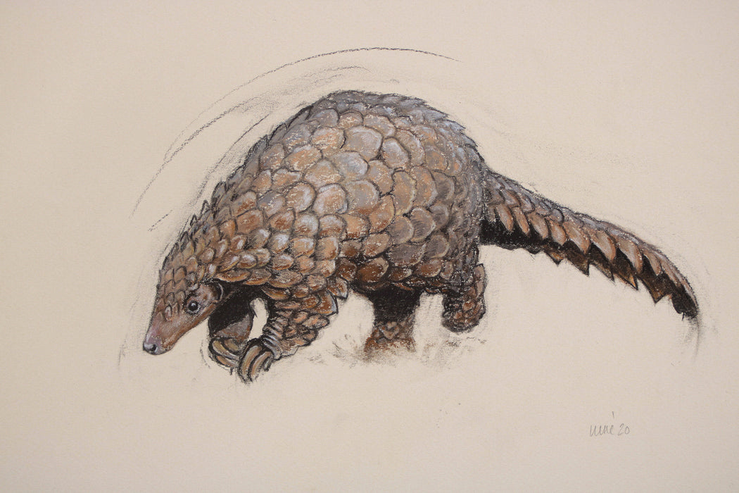 Heather Irvine - Pangolin Special Limited Edition Print