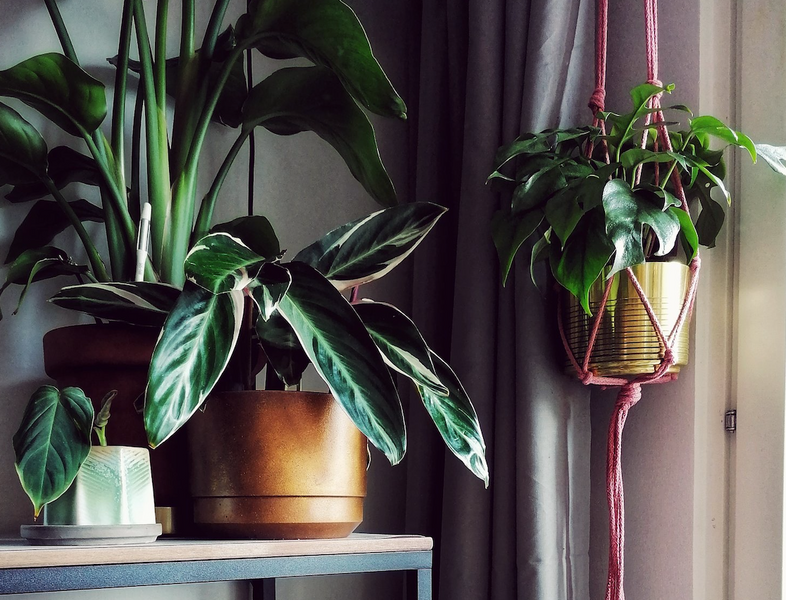 become an indoor plant person