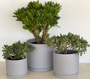 Matte grey terracotta pot - Always Greener