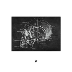 High Definition Human Anatomy Canvas Wall Art Prints Medical Education Decor