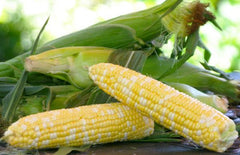 Corn on the Cob - half dozen