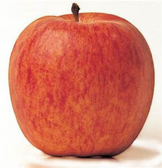 Macintosh Apples- BAG OF 3