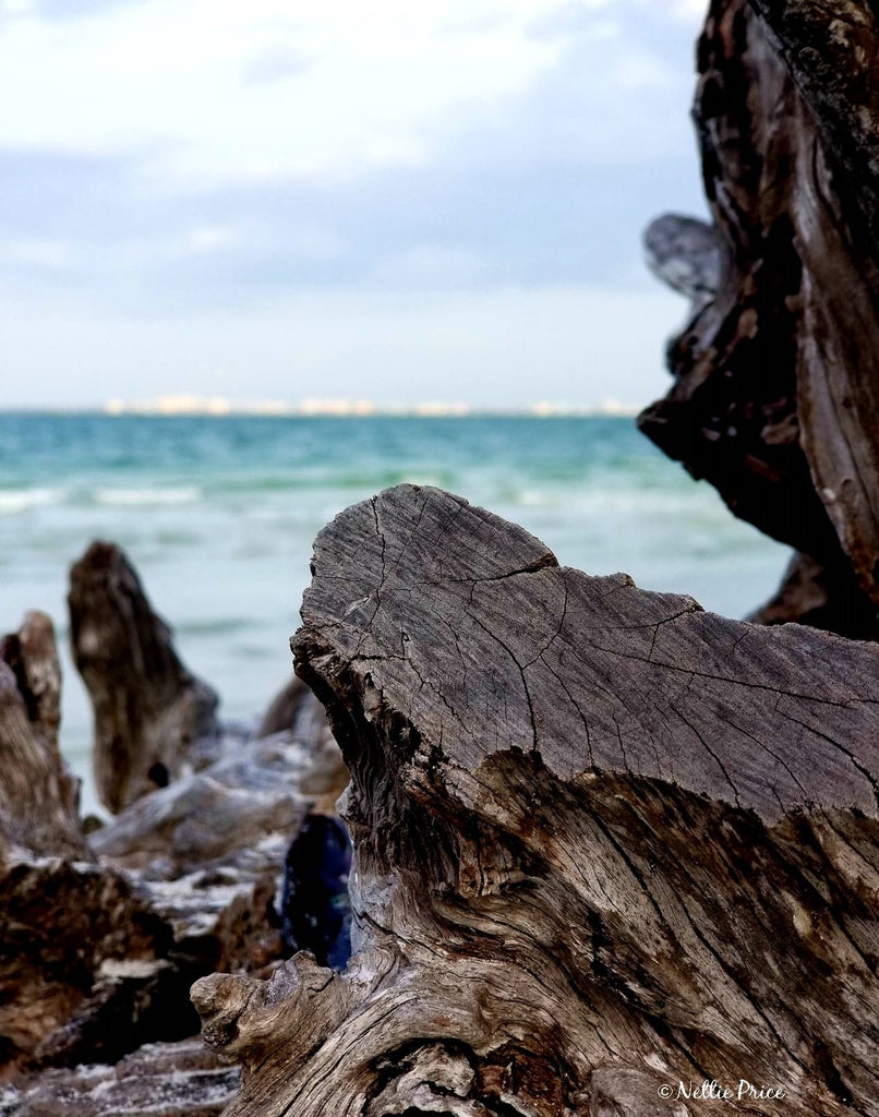 Driftwood in Sanibel 1 Print Mobile Photography