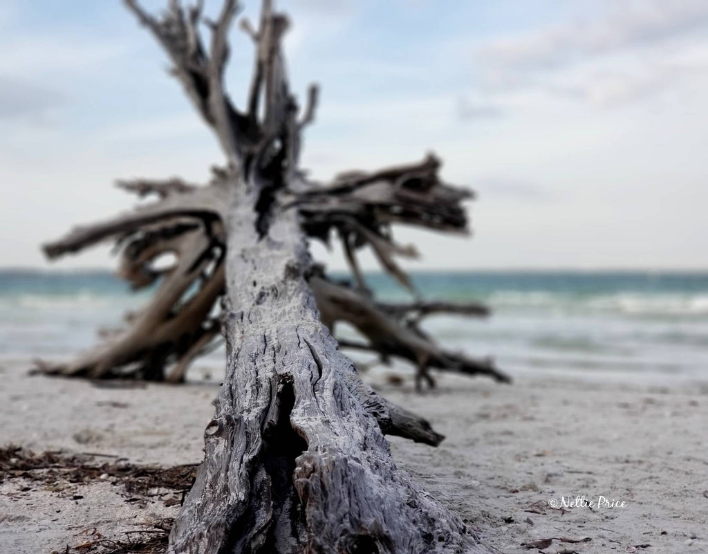 Driftwood in Sanibel 2 Print Mobile Photography