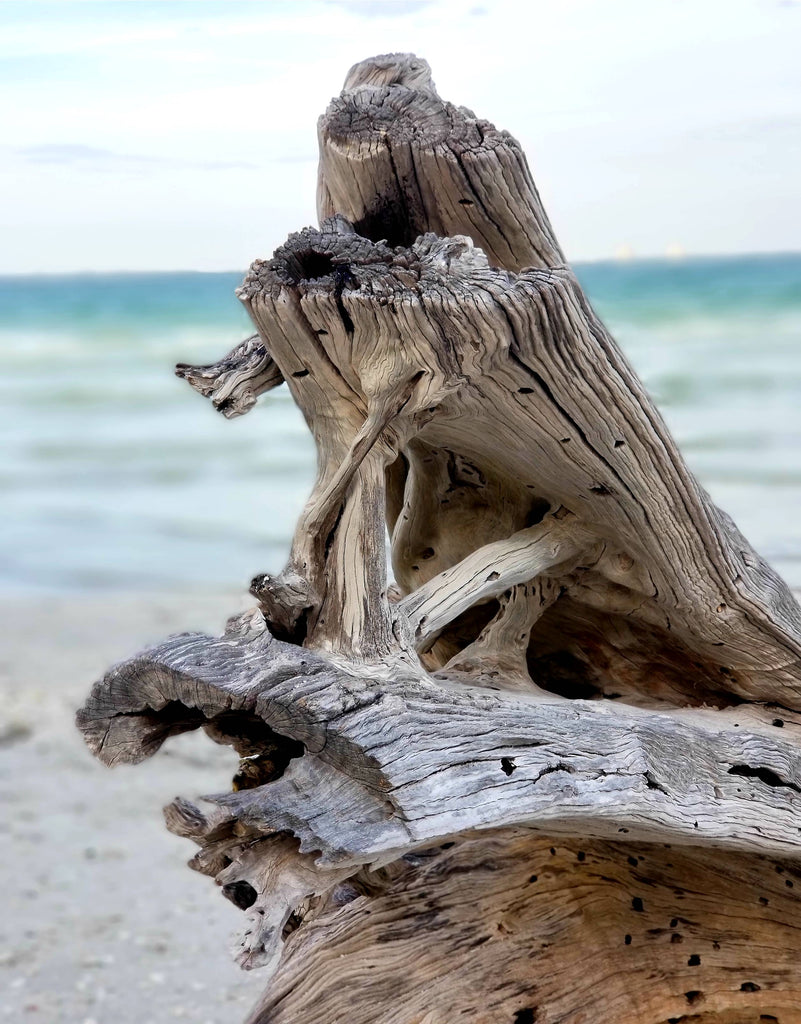 Driftwood in Sanibel 4 Print Mobile Photography