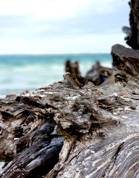 Driftwood in Sanibel 5 Print Mobile Photography