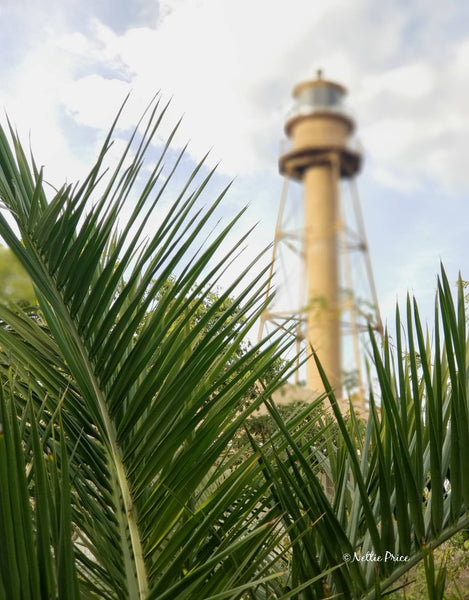 Sanibel Lighthouse & Palms Print Mobile Photography