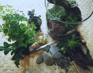 Terrrarium Classes