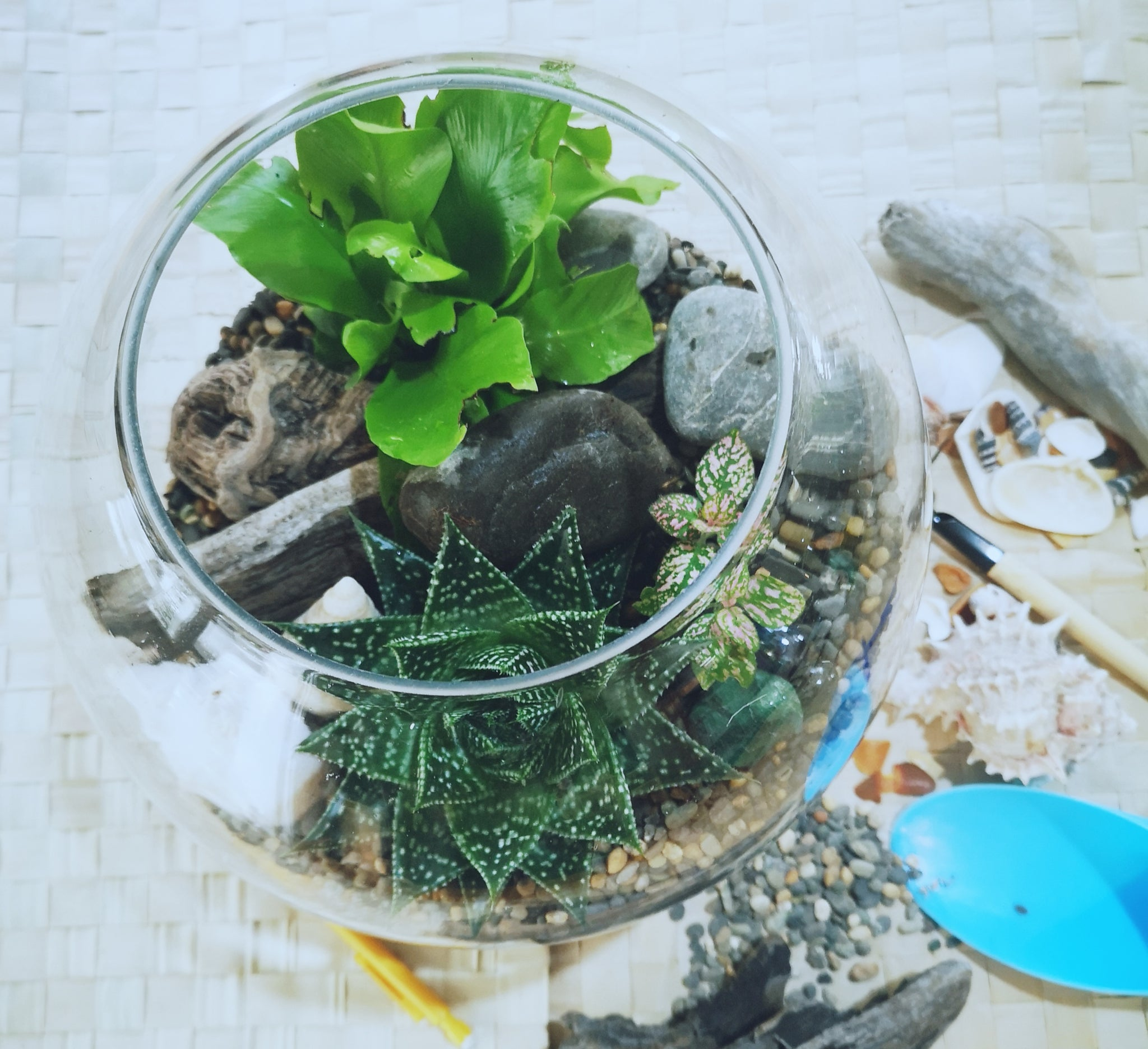 Fish Bowl Terrariums