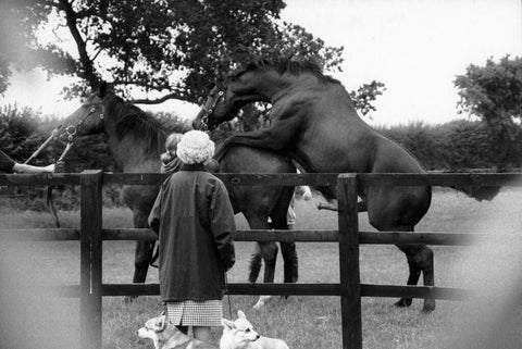 "Alison Jackson, ""Queen Watches Her Horses Mate"""