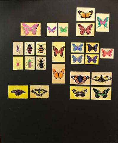 "Brigitte Engler, ""Insect collection (lepidoptera and coleoptera)"""