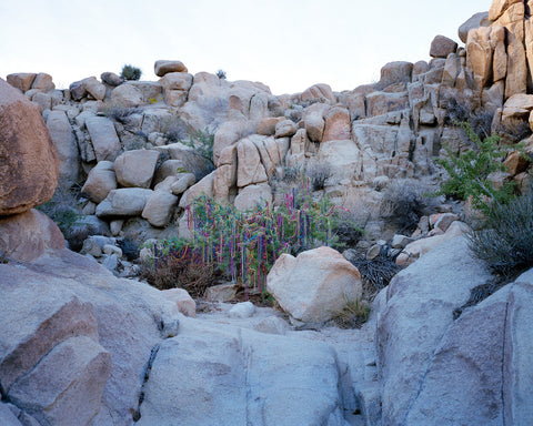 "Lauren Silberman, ""Willow Variation #3 (Desert)"""