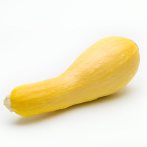 Squash Yellow (1 EA)