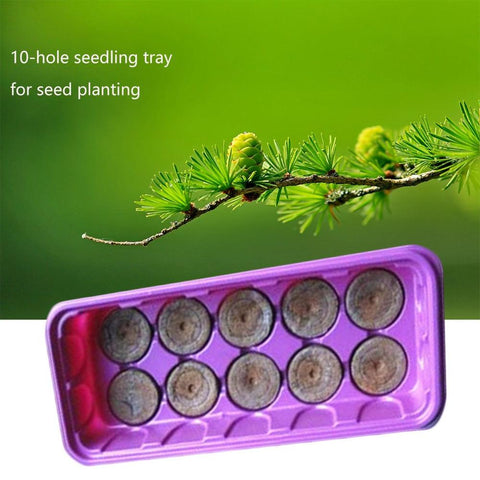 Seed Box Planting Special Starting Tray