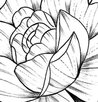 Peony linework half sleeve tattoo high resolution download