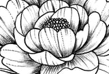 Peony sideboob linework tattoo design high resolution download