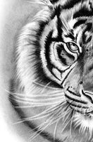 Realistic tiger tattoo design high resolution download