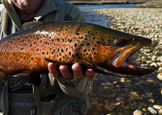 trout flyfishing snowy mountains close up