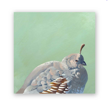 Gambel's Quail on Birch