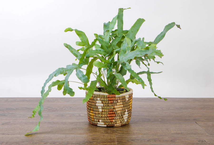 Shades of Sand Dafina Planter