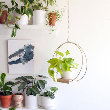 Solana Plant Hanger & Stand