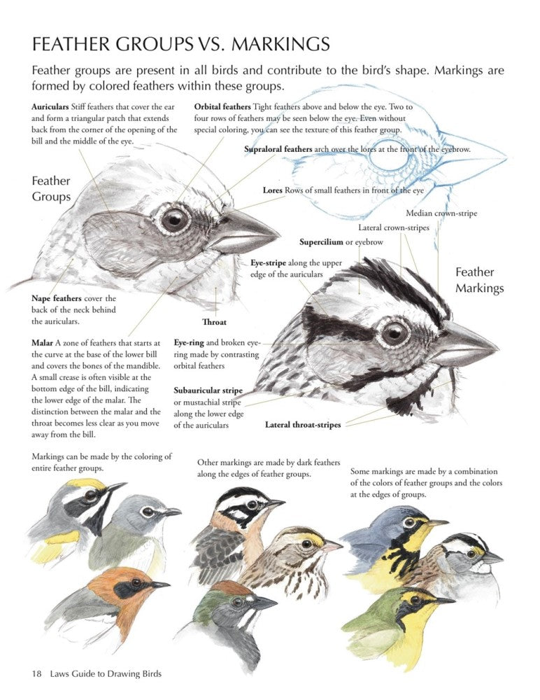 Law's Guide to Drawing Birds