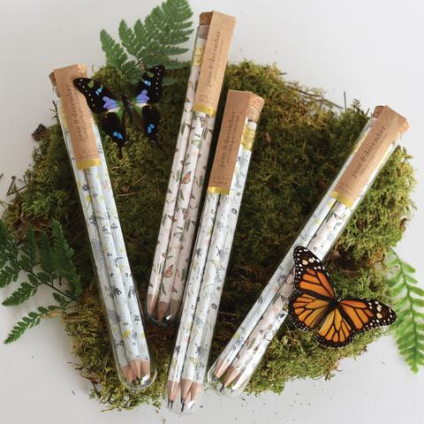 Pencil Terrarium