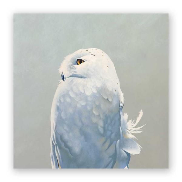 Snowy Owl on Birch