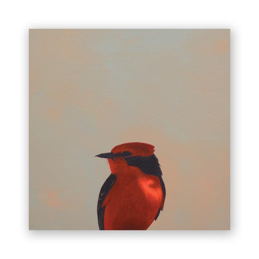 Vermilion Flycatcher on Birch