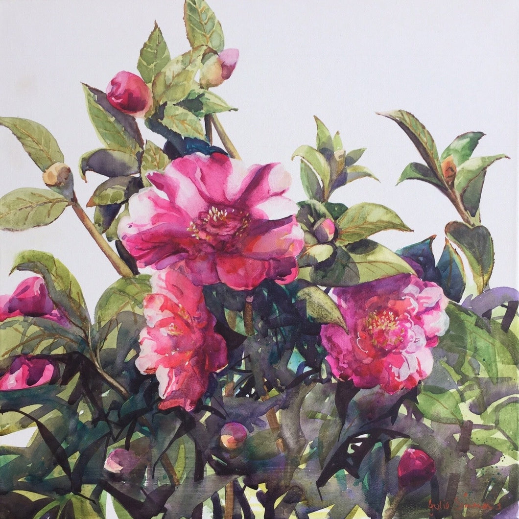 'Camellias' Limited Edition Archival Print of a Julie Simmons Water Colour