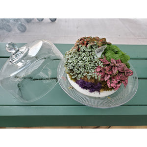 "10"" Glass Cake Plate With Mini Garden"