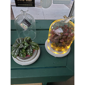 Light Up Terrarium 7.5x5.5