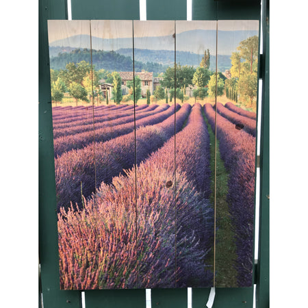 "French Lavender Wall Art 28"" x 36"""