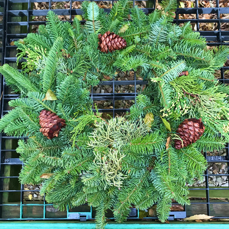 "20"" Mixed Wreath with Cones"