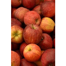 Malus 'Red Delicious'