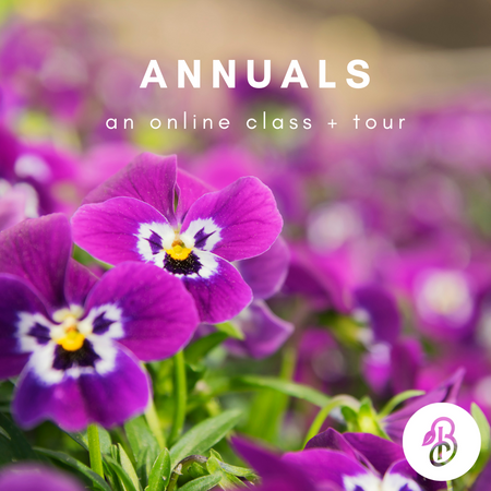 (online) All About Annuals:  Class + Tour