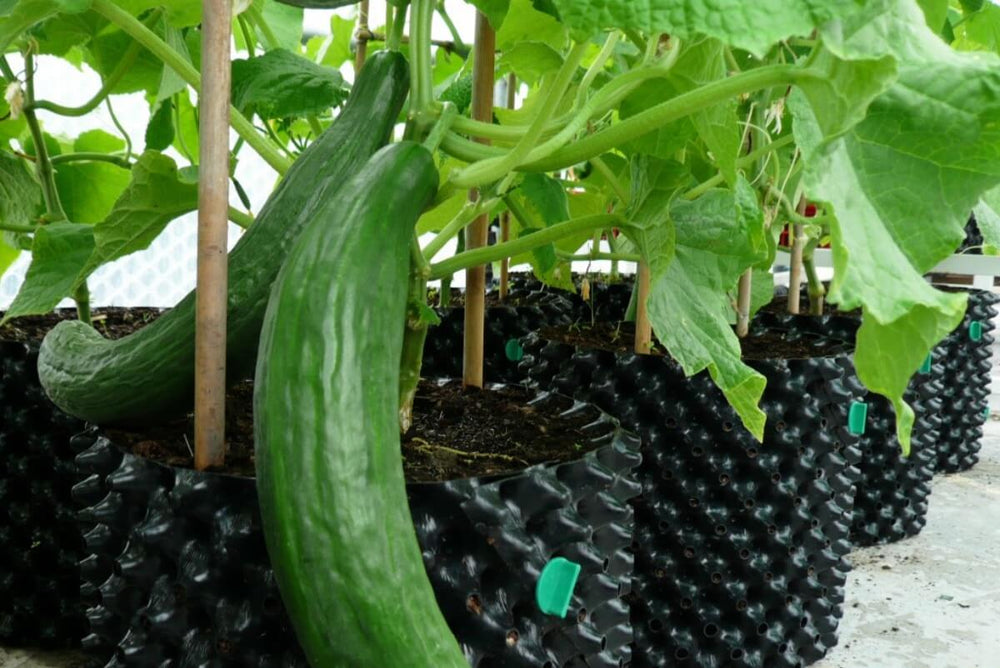 Load image into Gallery viewer, Air-Pot Garden Large Cucumber